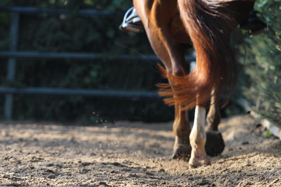 Een paard kopen of leasen