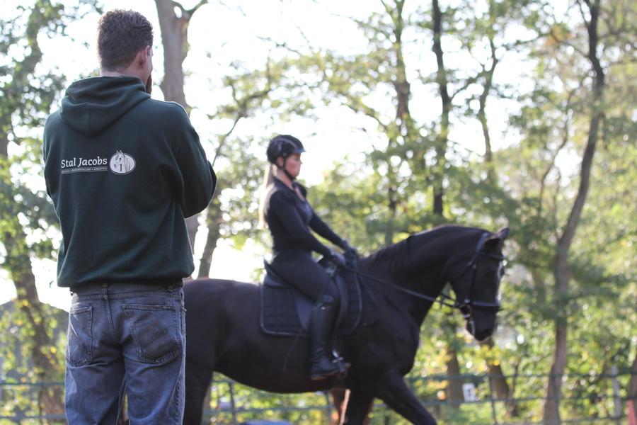 Paard- en ponyrijlessen